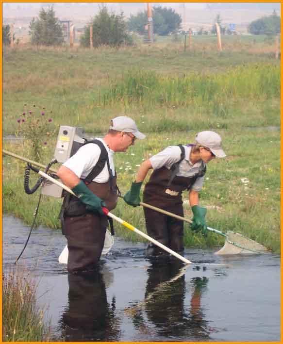 Kleinschmidt creek_Electrofishing team